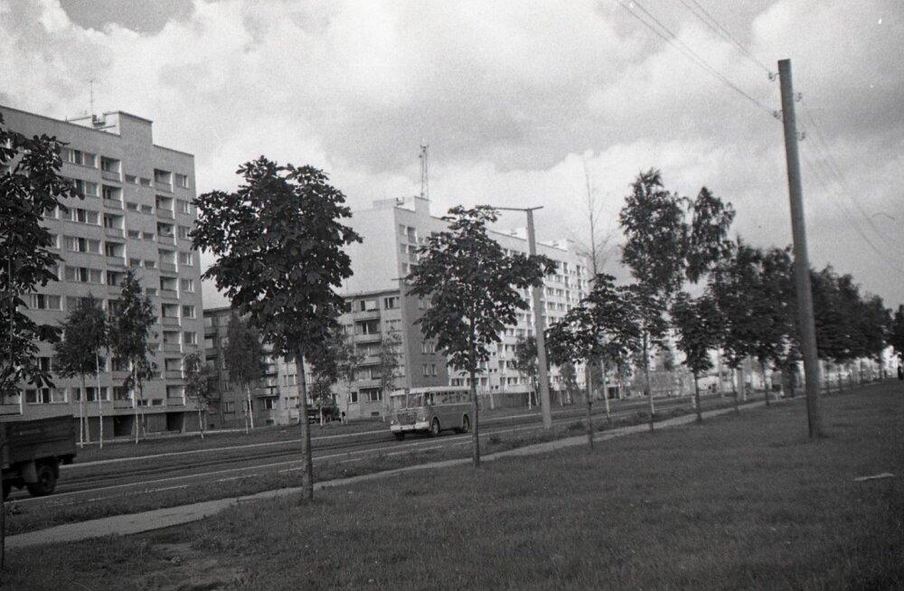 1960. aastate Pelgulinn
