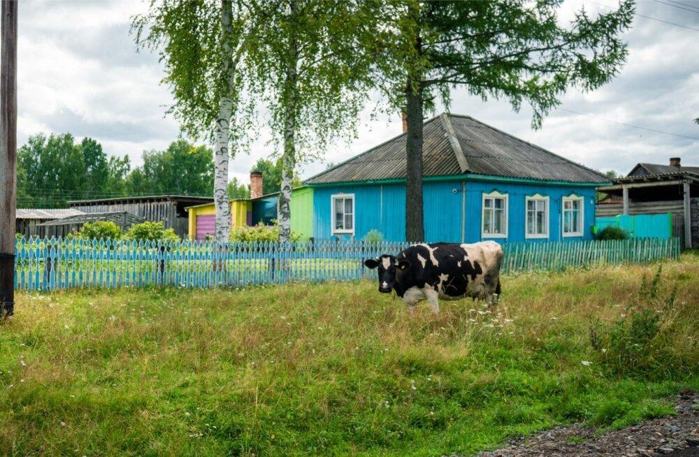 Sinimustvalge külapilt Kasekülast.