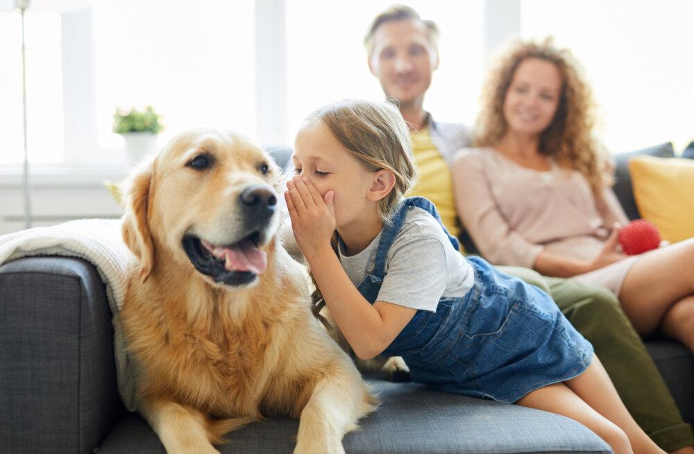 Lapsik olla on okei: lemmikloomadega rääkimine näitab tegelikult inimese intelligentsust