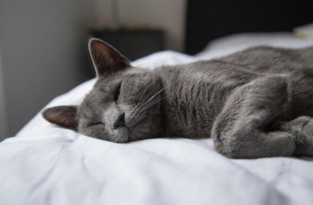 HEA TEADA | Kas lemmikloomaga voodi jagamine on hea idee?
