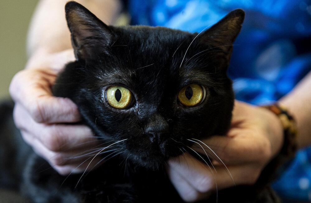 New Yorgi osariigis osutus positiivseks kahe kassi koroonaviiruse proov