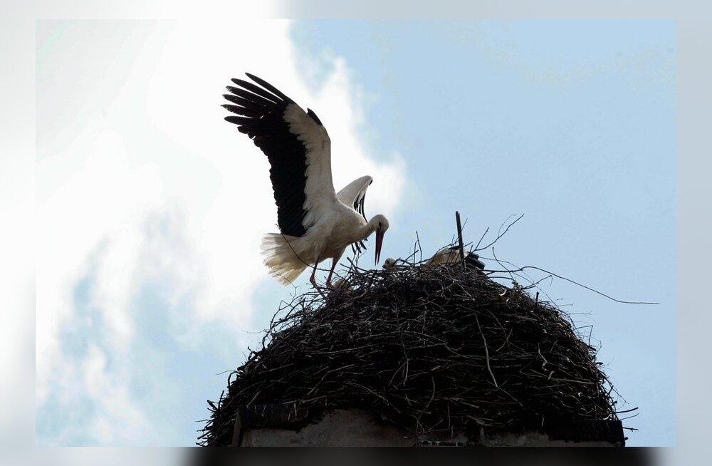 Linnumunade korjamine ja lindude häirimine pesitsusajal on keelatud