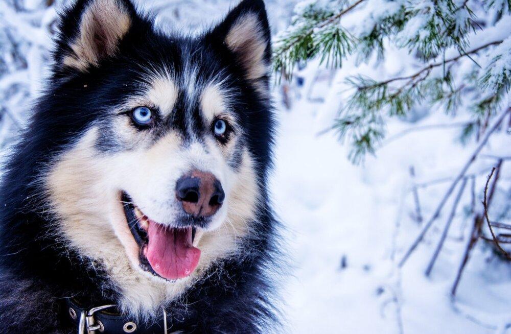 ТОП-8 самых дружелюбных пород собак