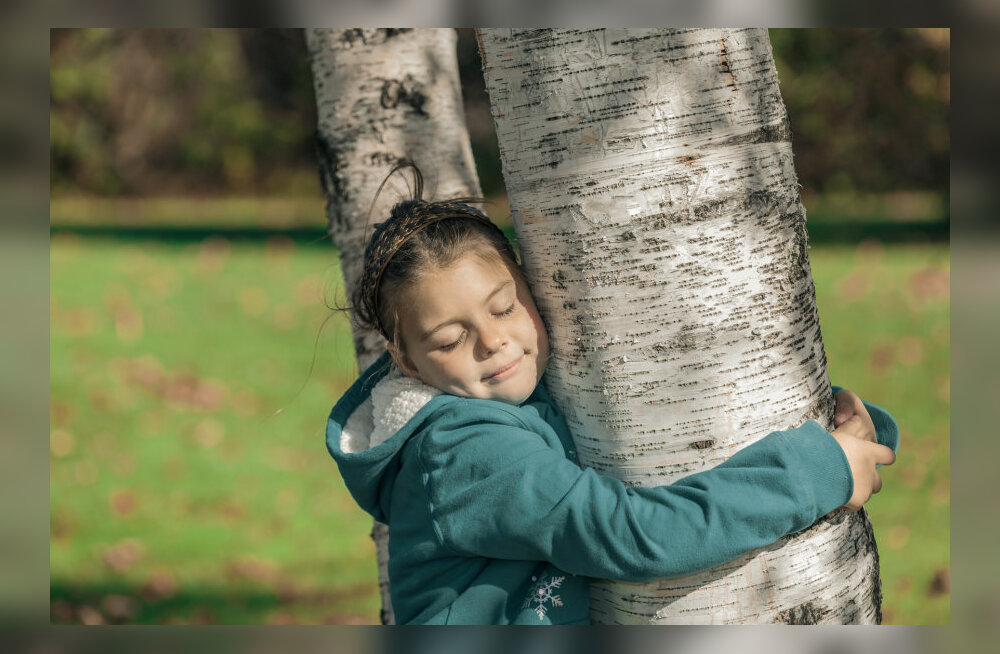Puudekallistamise kasulikkus on teaduslikult tõestatud