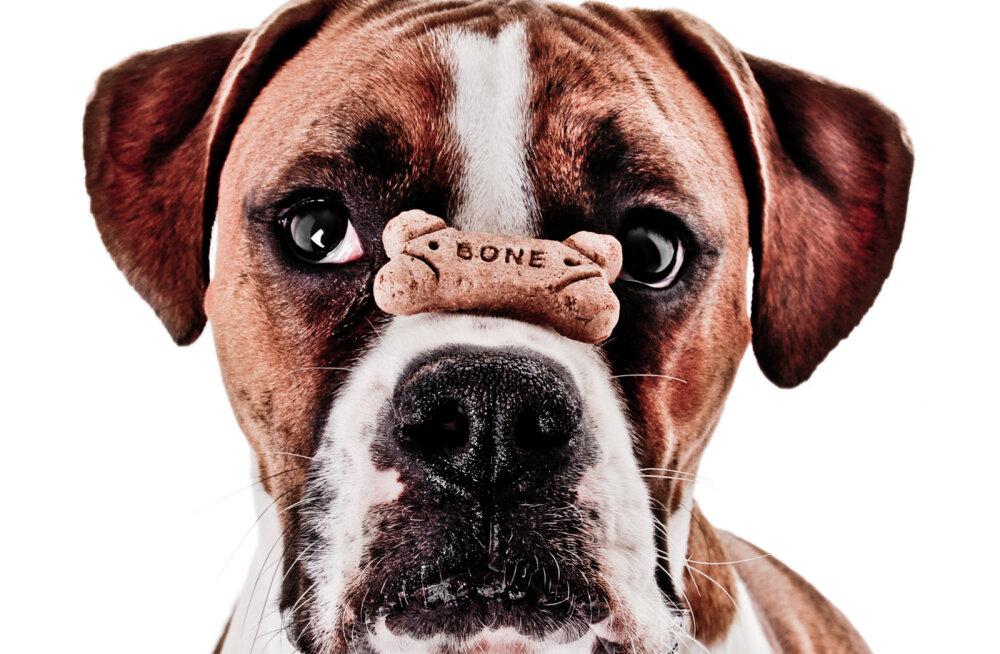 Küsimused ja vastused: ekspert annab nõu koeraomanike tekkinud küsimustele