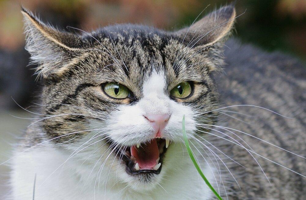 NIPID | Mida teha siis, kui kassid kodus tülitsevad?