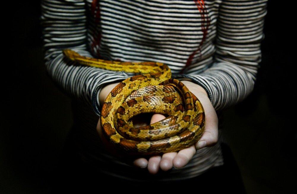 HOROSKOOP: mao märgi all sündinud inimene on salapärane ja kütkestav, kuid sageli ohtlik ja petlik