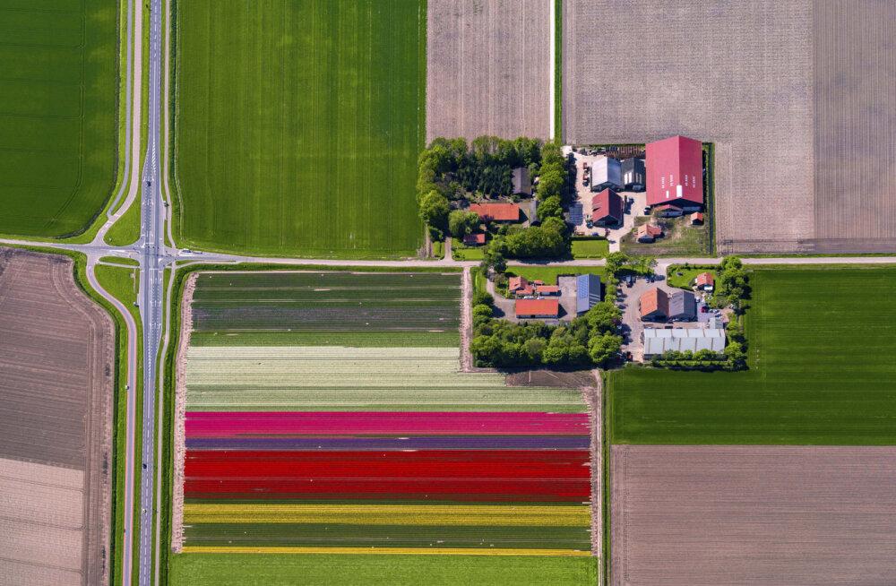 """Поля тюльпанов, золото инков и """"ракетная война"""" между церквями: цветущий апрель — куда поехать и что посмотреть?"""