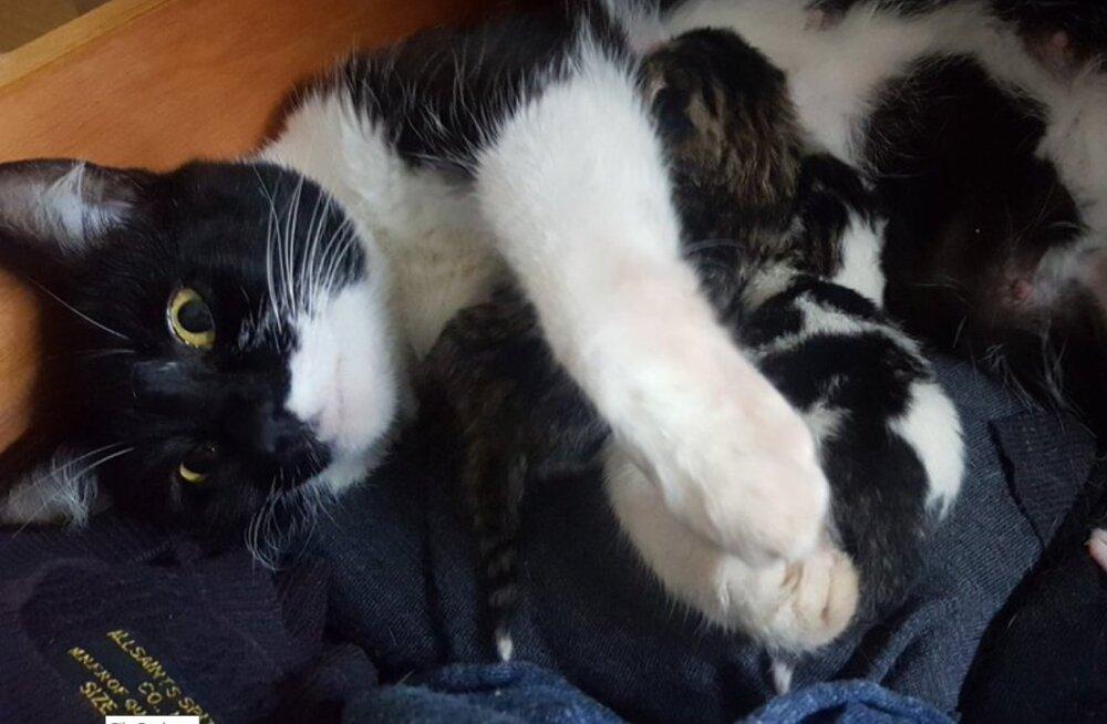 KURIOOSUM | Filmioperaator leidis voodi alt pesakonna kassipoegi, kelle olemasolust ei olnud tal aimugi