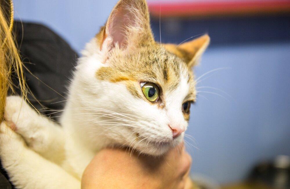 Koduleidja - kass Kelli