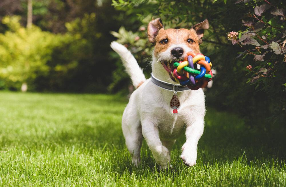 5 meedet, mis aitavad lemmiklooma puukide eest kaitsta