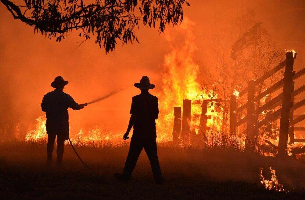 Ei mingit rallit. Austraalias möllavad hiiglaslikud tulekahjud.