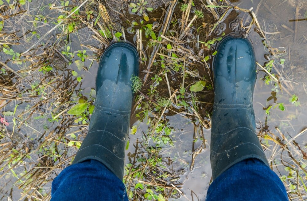 Vihm on viljapõllud üle ujutanud