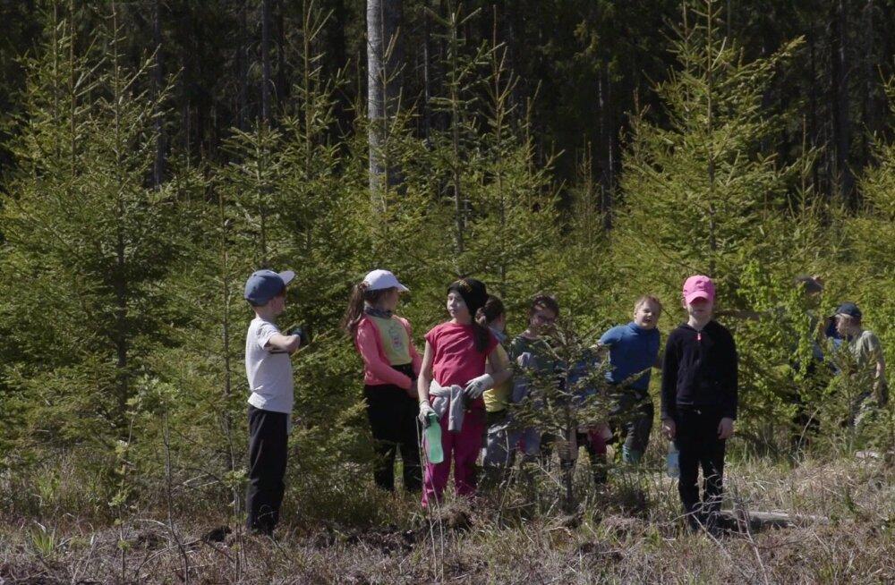 9-aastased - nii lapsed kui mets. Nende päralt on tulevik.