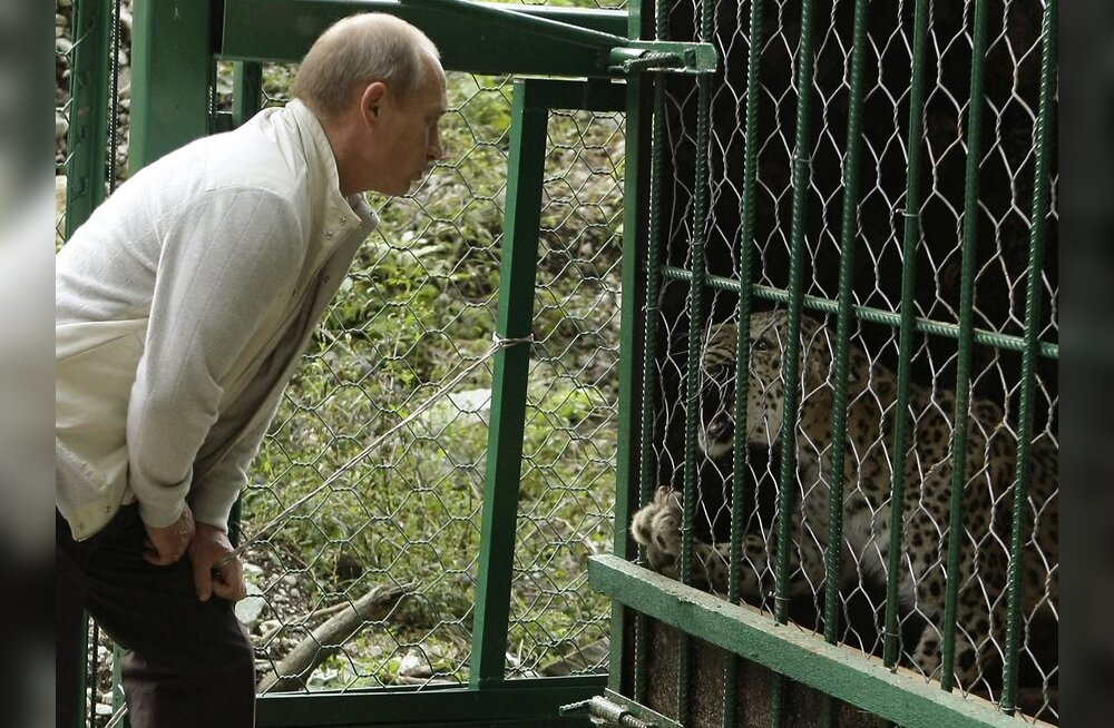 Russia's Prime Minister Vladimir Putin looks at a leopard as he visits the National Park in Sochi, September 19, 2009. Picture taken September 19, 2009.  REUTERS/Ria Novosti/Pool/Alexei Druzhinin  (RUSSIA POLITICS ANIMALS)