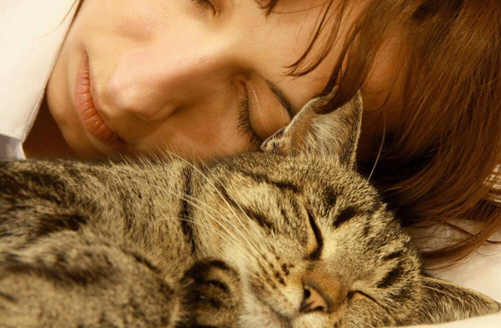 Otsid kaisulooma? 7 kassitõugu, kes on tõeliselt südamlikud perelemmikud