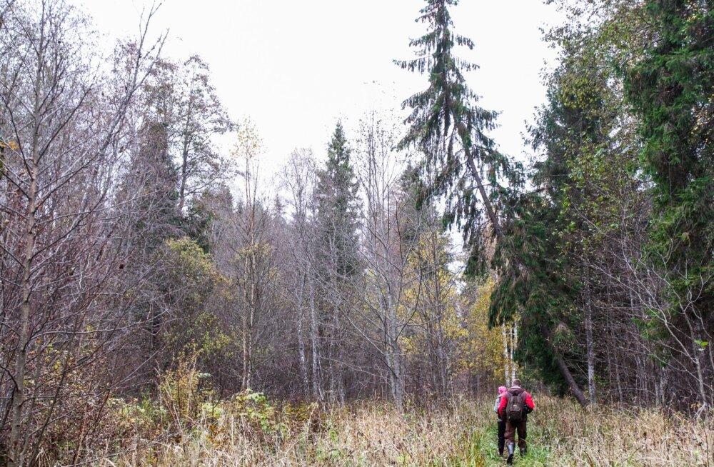 Mets Alutagusel