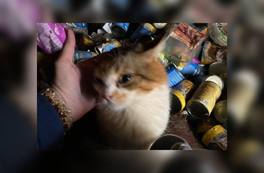 ŠOKEERIVAD FOTOD | 18 kassi olid Viljandis aastaid oma väljaheidete sees vangis