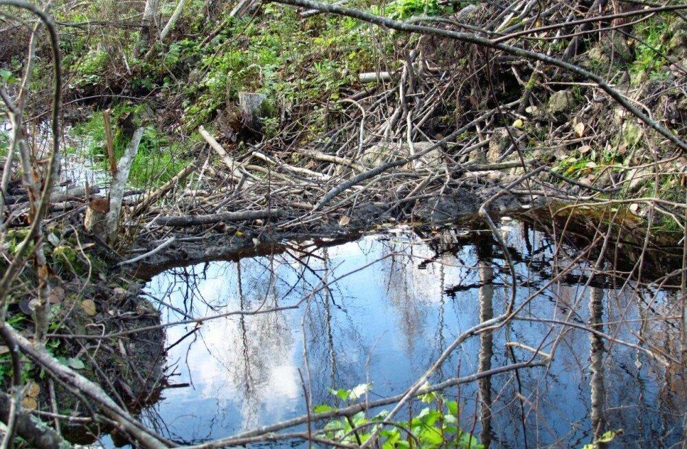 Leili metsalood | Koprad ja rähnipuu