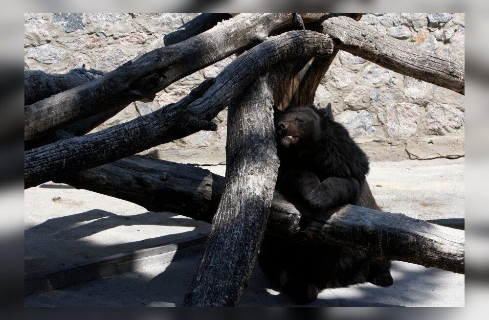 Harkivi loomaaia elanikke ähvardab näljasurm