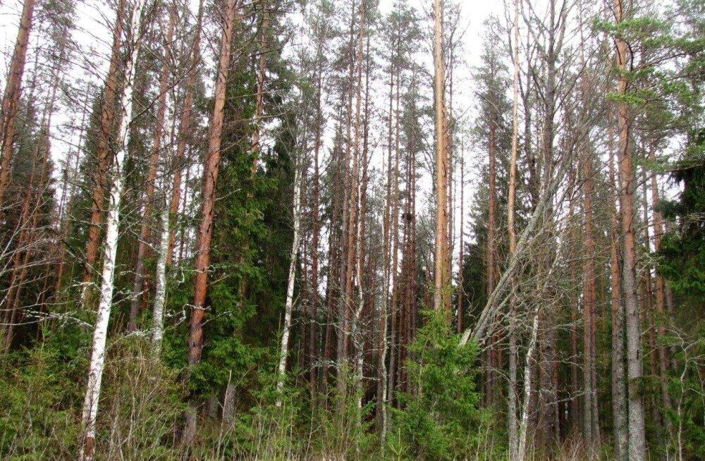 Leili metsalood   Natura metsatoetuste taotlemisest