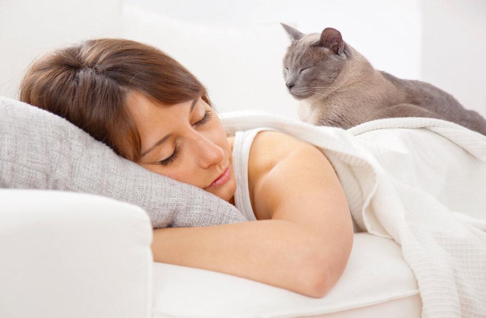 VASTUS KÜSIMUSELE: miks mu kass minu otsas kõndida ja magada armastab?