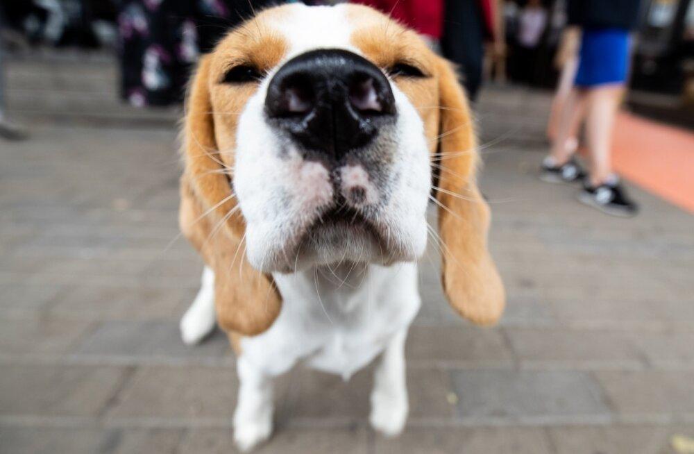 Koerad pole ainult mõnusad kaaslased, vaid aitavad tuvastada ka haigusi