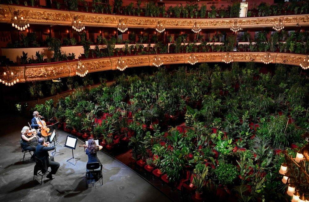 ФОТО | Невероятно! Оперный театр в Барселоне провел концерт для 3000 комнатных растений