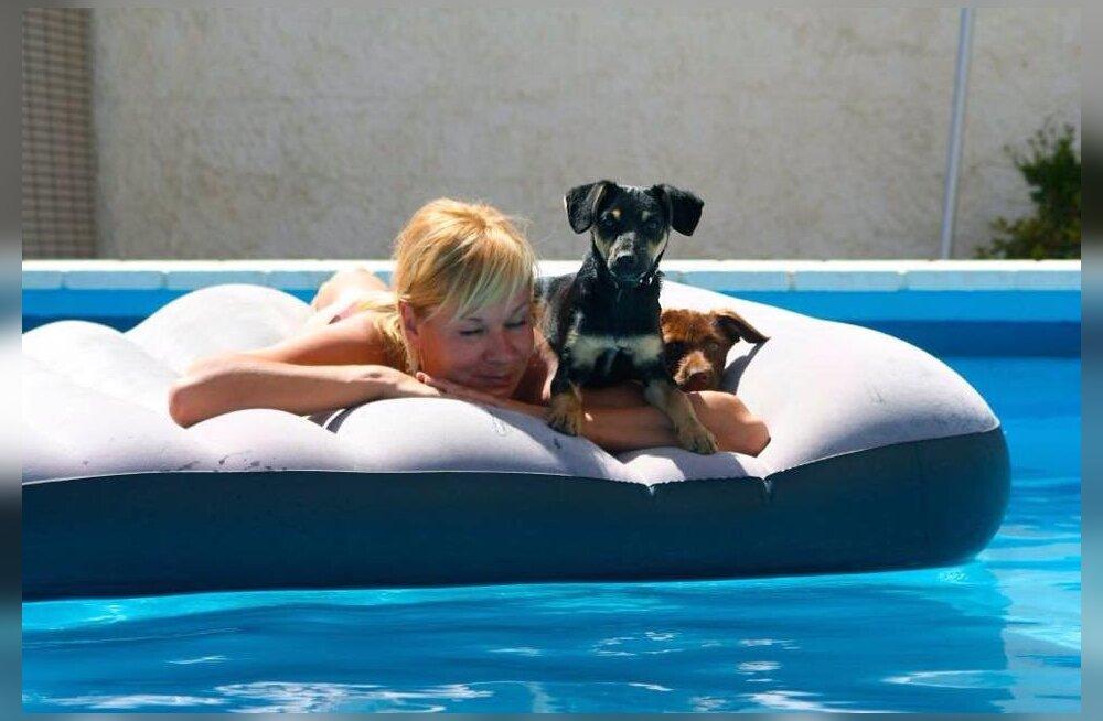 Aroomiteraapia koertele: millised eeterlikud õlid su lemmiku tervist turgutavad?