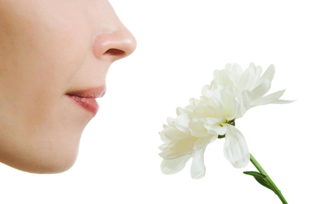 Uuring: Su keha teab, millal surm on lähedal, kõik algab ninast