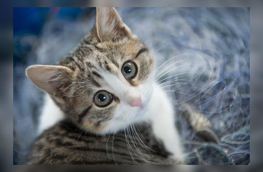 Сгрыз кот. Утопил в унитазе. 10 необычных случаев, как эстоноземельцы сломали свои телефоны