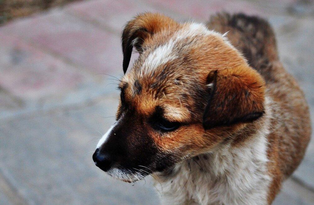 GALERII   20 südantlõhestavat fotot Harvey orkaaani küüsi langenud loomade päästeoperatsioonidest