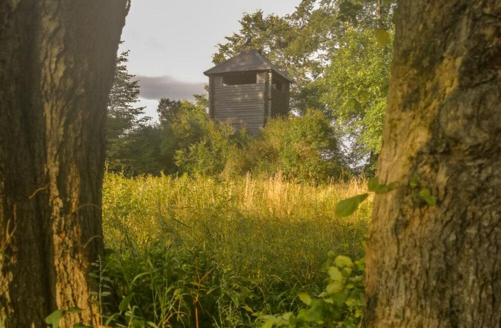 VIDEO | Imetle kaunist Eesti loodust: Altmetsa vahitorn, lõkkekoht ja Kirna õpperada