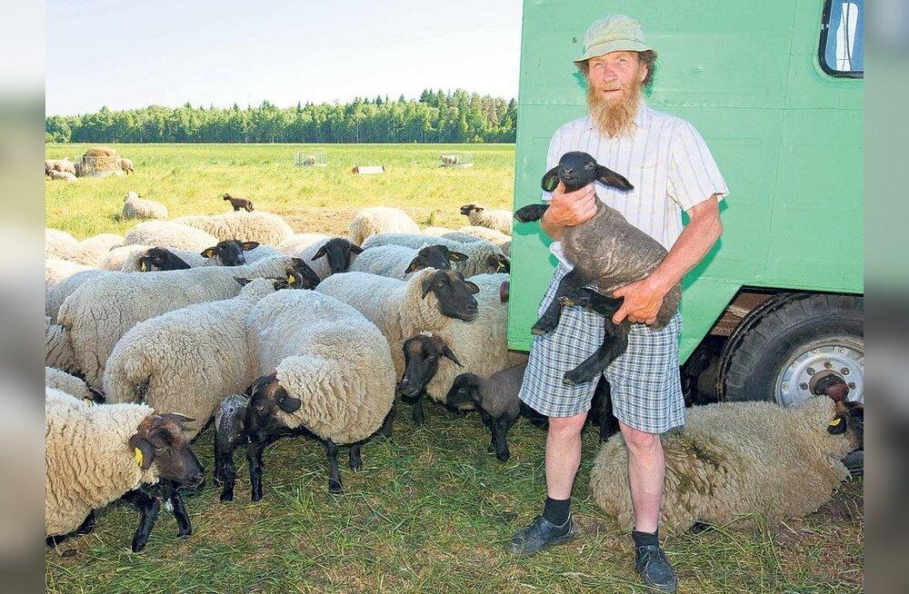 Tiit Kaivo aretab tumedapealisi lambaid