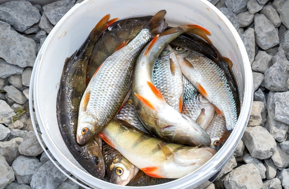 """СМИ: В балтийской рыбе обнаружен """"химический СПИД"""""""