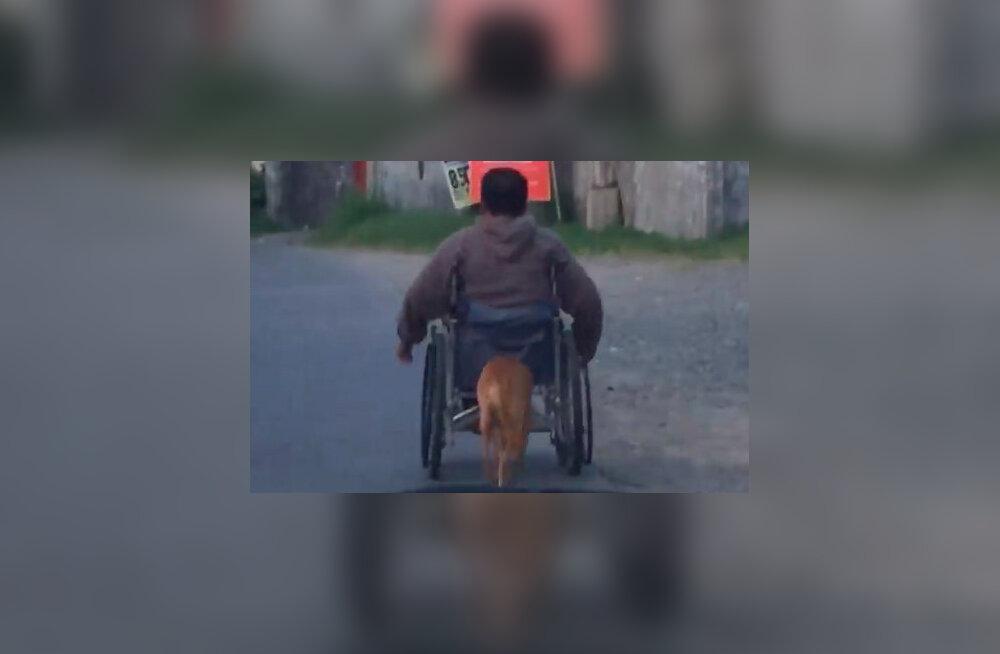 Südantsoojendav vaatepilt: koer annab oma peremehe ratastoolile hoogu