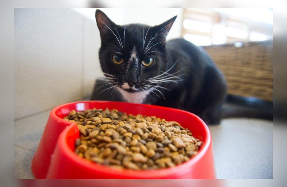 Tiina Toomet: Lemmikloomad ei lähe paksuks iseenesest, omaniku käsi on see, mis liigselt toidab