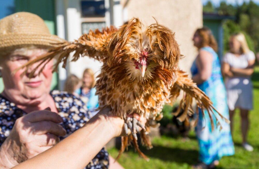 Vaat nii me siin maal elamegi! Meeleolukas hetk kanaga Läsna-Loobu külas, mis kannab aasta küla tiitlit ning on ehe tõestus, et maal mitte ainult et saab elada, vaid saab elada hästi.