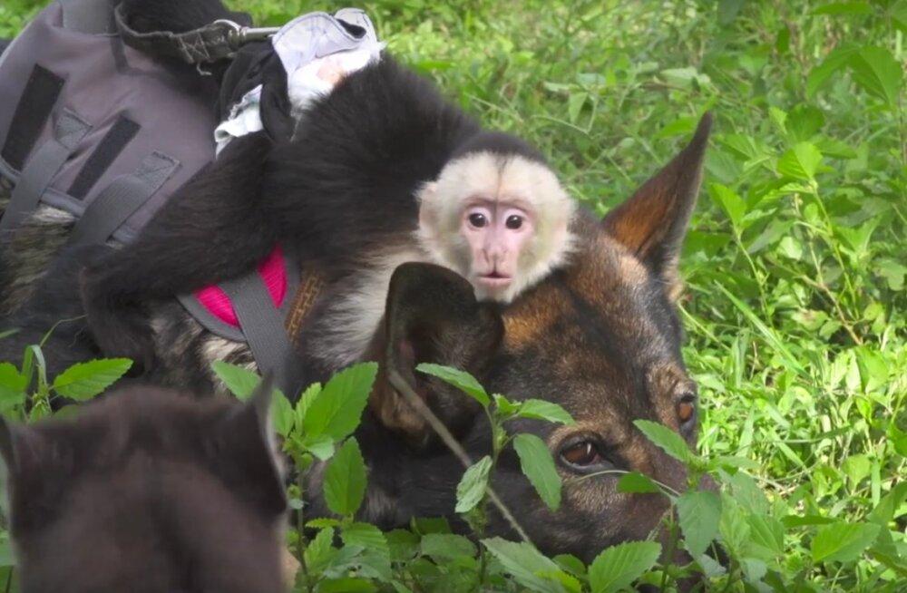 Südamlik hoolitsus: saksa lambakoer pakub loomapargi kõige väetimatele päevahoiuteenust