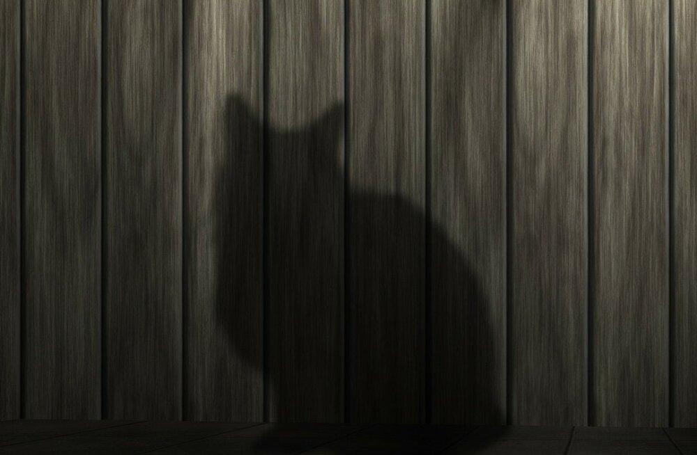 6 fakti: mustad kassid - salakavalad halva õnne toojad või armsad lemmikloomad?