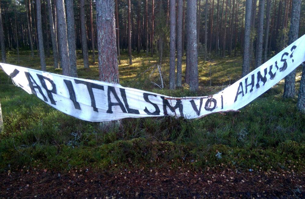 PÄEVAPILT | Metsakaitsjad võitlevad lageraie vastu metsa riputatud plakatitega