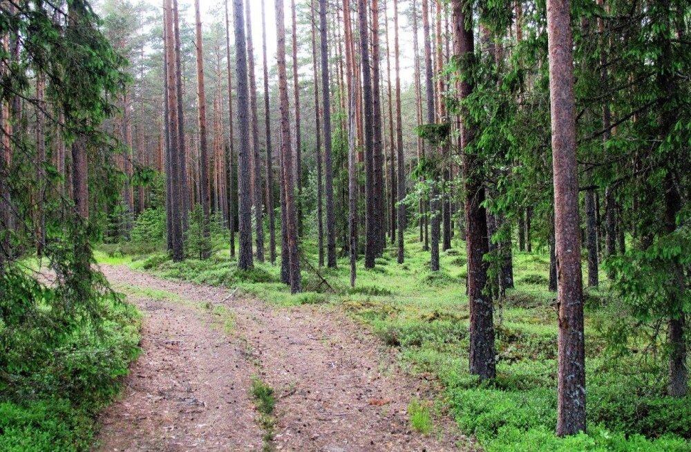 Leili metsalood | Pika vaatega mets