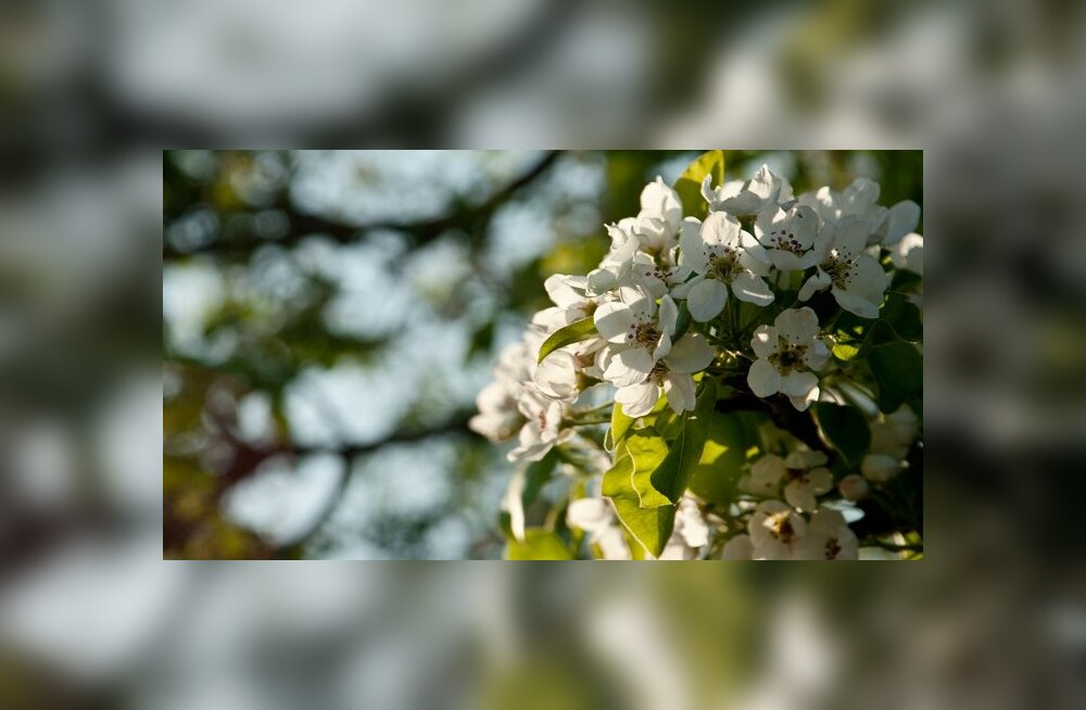 Kevad Maaritsas algas hoogsalt
