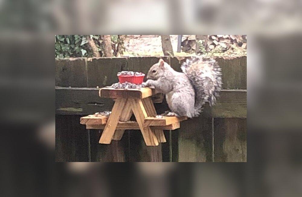 VIDEO | Lahke mees valmistas oravatele piknikumööbli