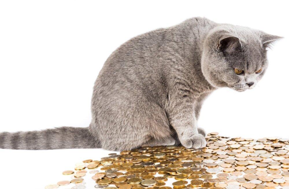 Tõeline heategu: naine annetas Pesaleidja väärkoheldud kasside raviks vajaminevad paarisada eurot vaid loetud minutid pärast abipalvet