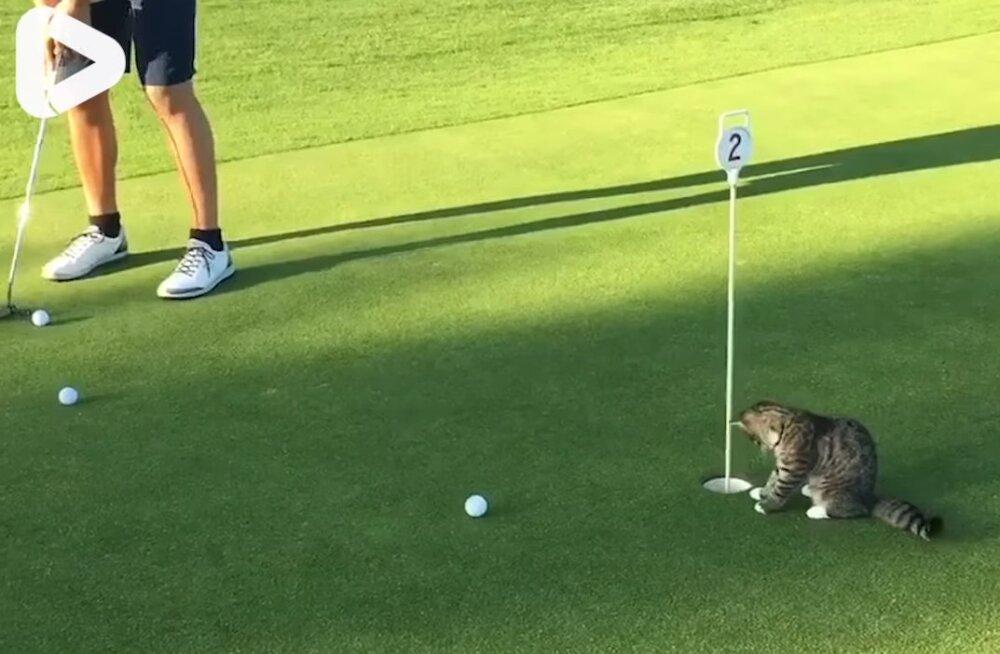 Naljakas VIDEO | Golf oleks palju lõbusam, kui selline asi väljakul päriselt võimalik oleks