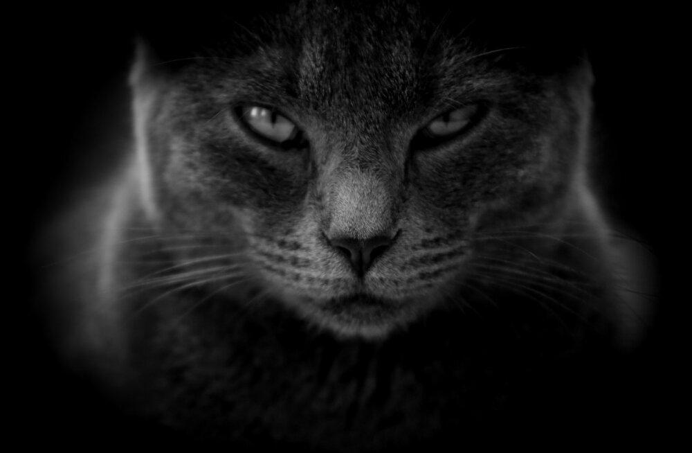 Miks osa inimesi kasse kardab?