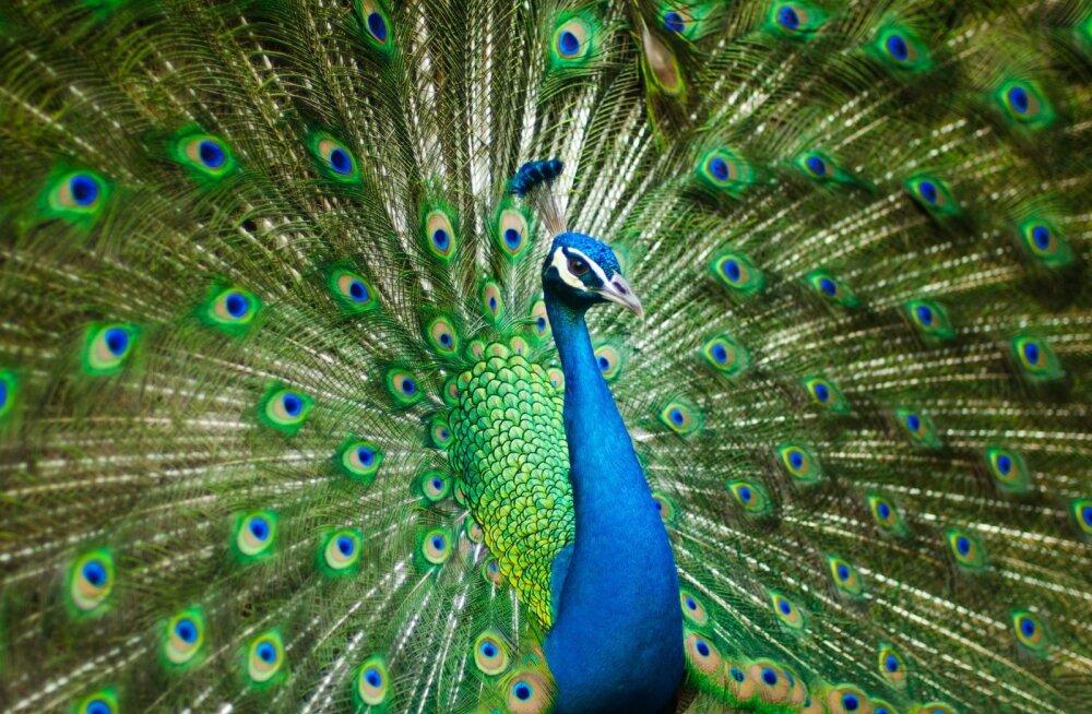 TEST   Haara võimalusest kinni ja vaata, millise looma tuline iseloom sinus peitub?