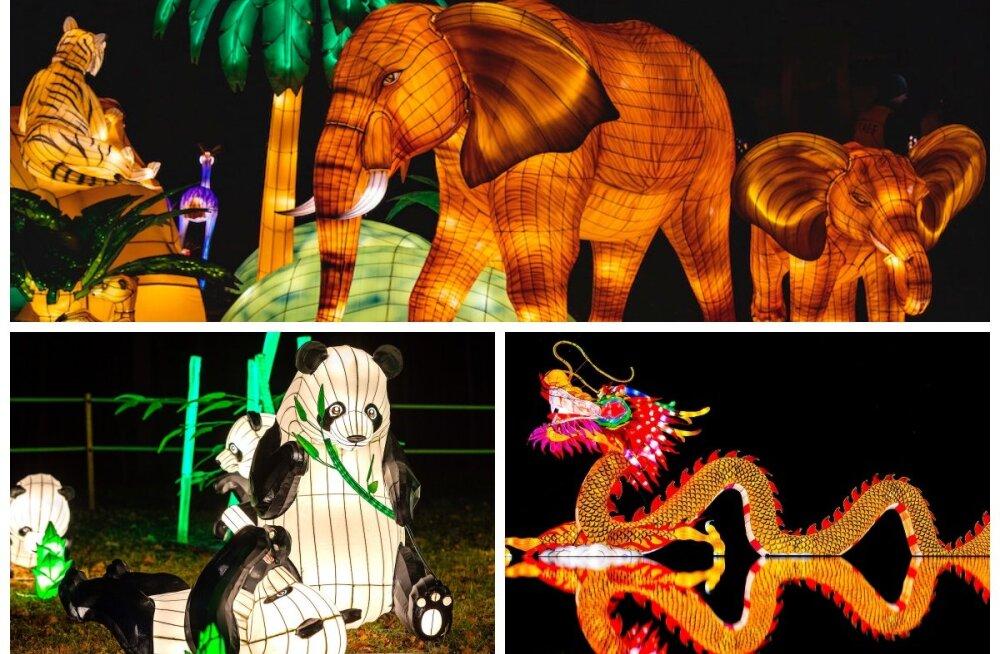 Такое нельзя пропустить! В Эстонии впервые пройдет крупнейший азиатский фестиваль фонарей