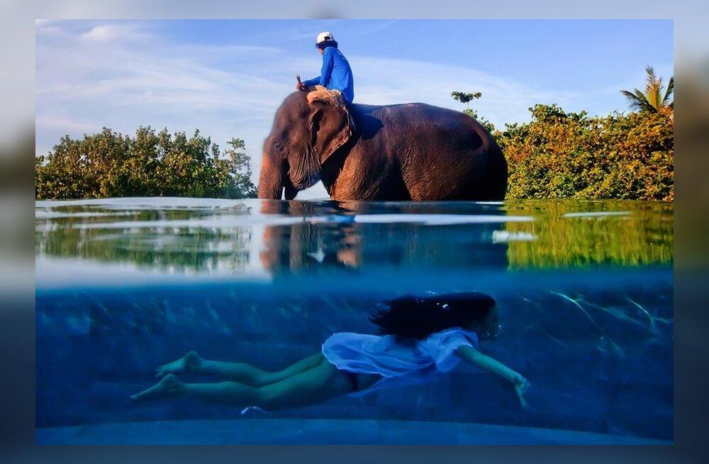 Erakordne tabamus, 1. koht: tüdruk basseinis, elevant teisel basseini